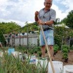 Moestuin verliest het van slakken en regen